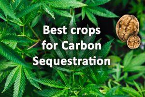 best crops for carbon seqestration