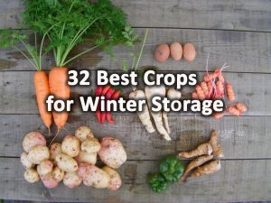 Best crops for winter storage