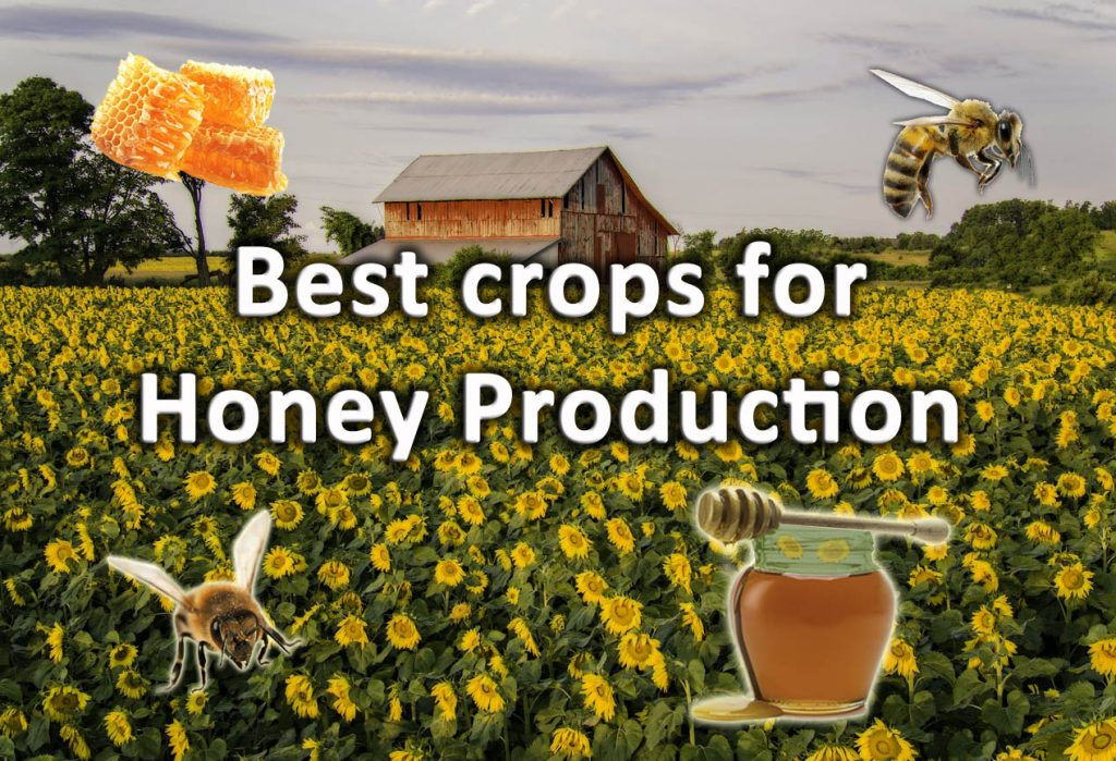 Best crops for honey production