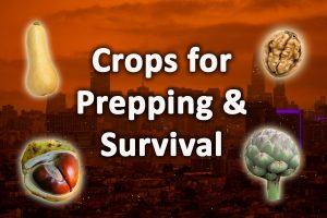 Best crops for prepping and survival