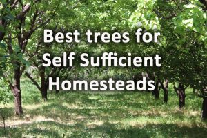 Best trees for self sufficiency homesteading