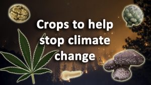 Crops to help stop climate change
