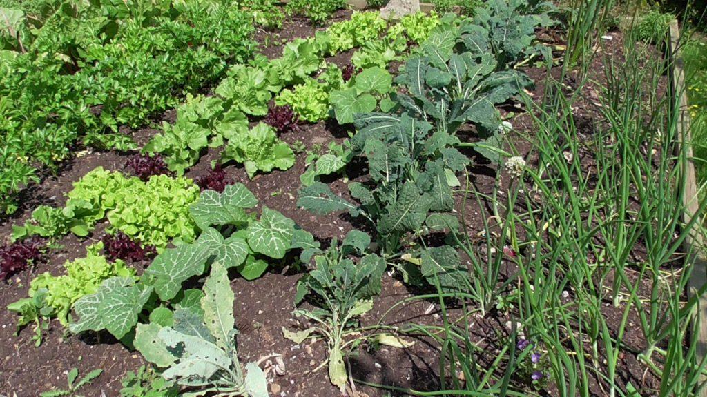 Homesteading vegetables