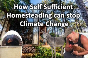 How self sufficient homesteading can stop climate change