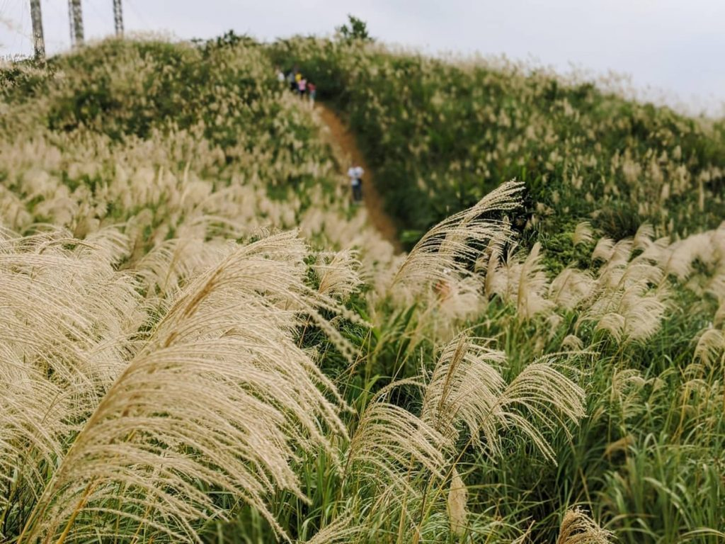 Miscanthus climate change