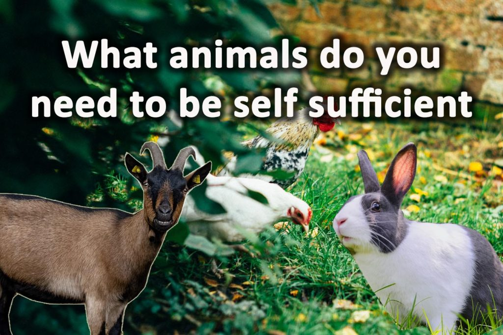 What animals do you need to be self sufficient