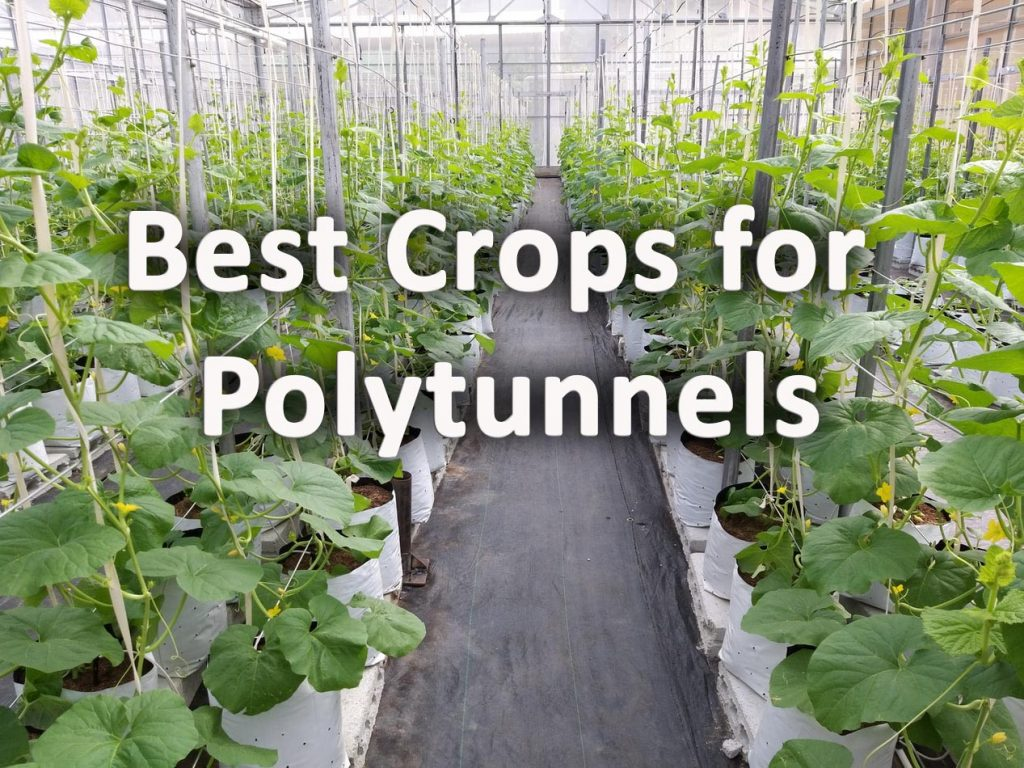 Best crops for plytunnels