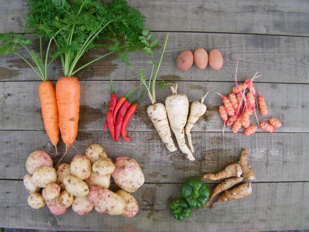 Best vegetables for self sufficiency